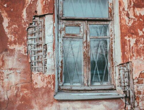 Il Lichen: cos'è? Come si cura?